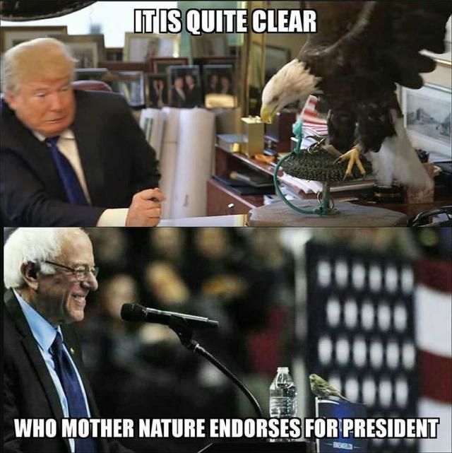 birdie-sanders-vs-trump